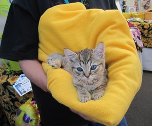 adorable, kitty, and animals image