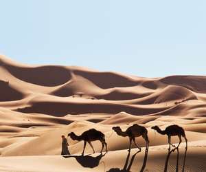 camel, animal, and desert image