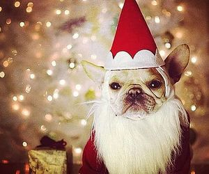 christmas, dog, and santa image