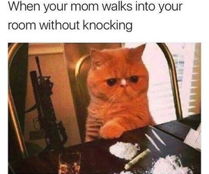 funny, cat, and mom image