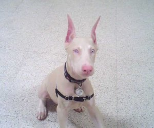 puppy, sitting, and white image