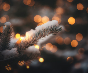 bokeh, winter, and branch image