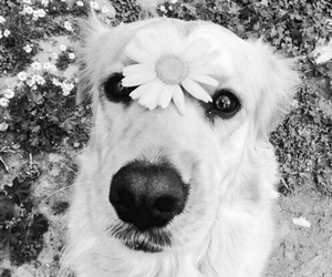 2016, black and white, and dog image