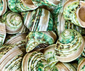 shells, texture, and green and white image