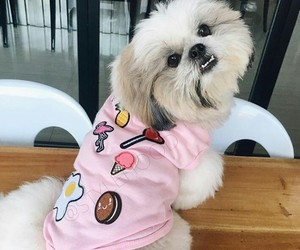 cute dog, dog, and puppy image