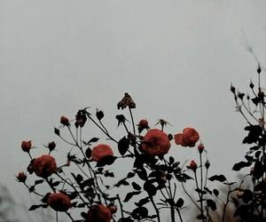 lockscreen, aesthetic, and flowers image