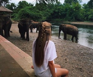 elephant, girl, and nature image