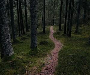 beautiful, wood, and green image