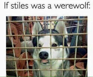 teen wolf, stiles, and funny image