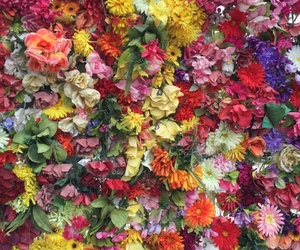 colors, flowers, and cute image