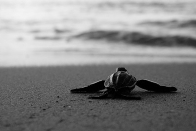 Beachblack And Whitephotographyseasweetwater Inspiring