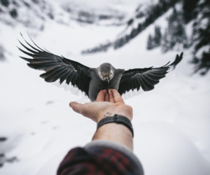 bird, winter, and photography image