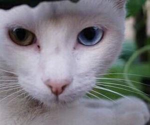 amazing, beautiful, and cat image