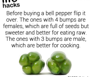 food and tips image