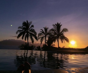 sunset, summer, and palms image