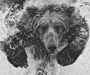 bear, water, and animal image
