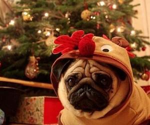 christmas, costume, and happiness image