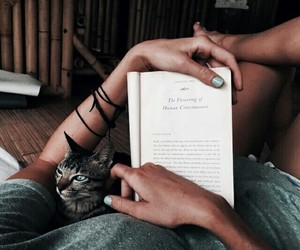 animals, books, and cat image