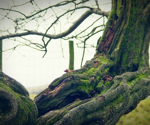 branch, tree trunk, and eyeem image