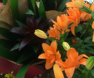 bouquet, carefree, and dark image