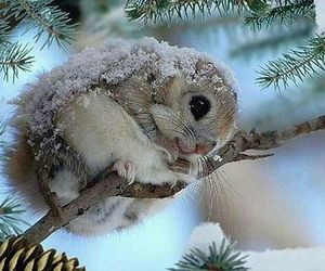 winter, animal, and cute image