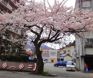 tree, pale, and flowers image