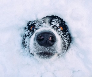 snow, dog, and winter image