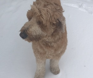 aesthetic, dog, and snow image