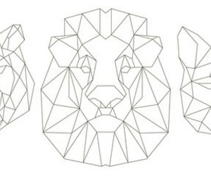 lion, panther, and tiger image