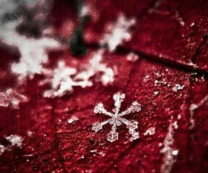 red, snowflakes, and red leaf image