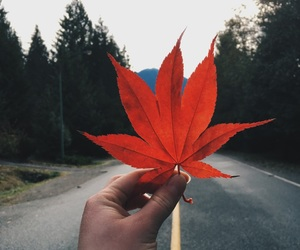 canada, fall, and hand image