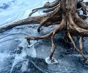 ice, winter, and nature image