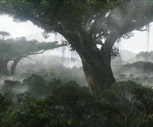 avatar and tree image