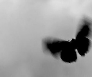 black, butterflies, and butterfly image