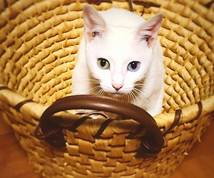 cat, cute, and eye image