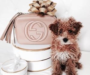 dog, gucci, and fashion image