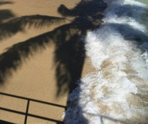 beach, tropical, and palm tree image