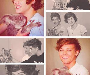 one direction and Koala image