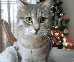 cats, christmas, and merry image