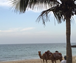 sea, dream vacation, and camel image
