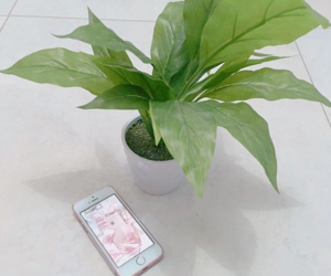 plants and cute image