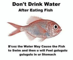 fish, funny, and water image
