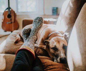 dog, animal, and vintage image