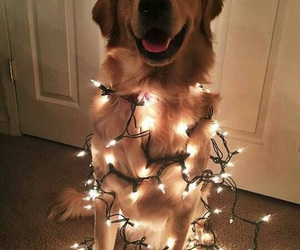dog and lights image