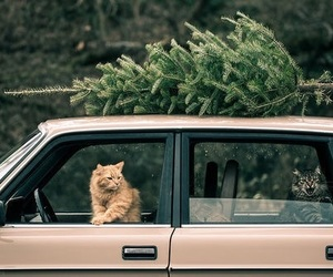 cat, car, and christmas image