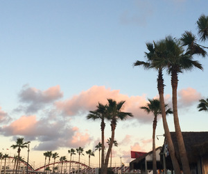palm trees and tumblr image