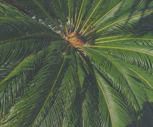nature, palms, and plants image