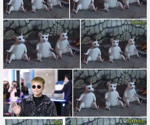 memes, bts, and blind rats image