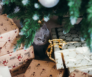 cat, christmas, and gift image