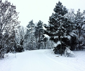 forest, snow, and sweden image